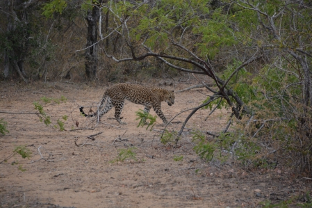 Yala National Park Safari